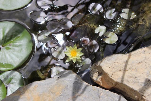 Mon p'tit jardin 082dk1