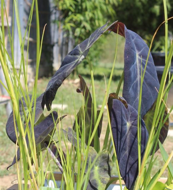 Mon p'tit jardin 082yaq