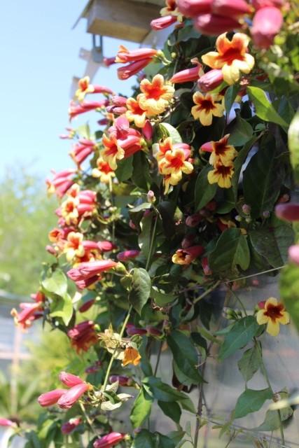 Mon p'tit jardin 0889k1