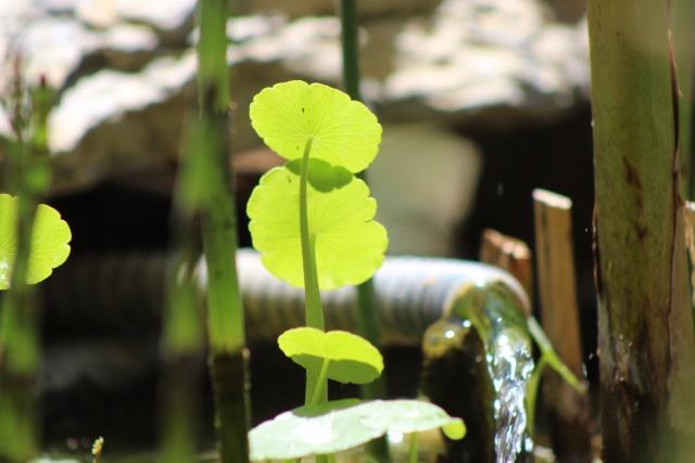 Mon p'tit jardin 088nd8