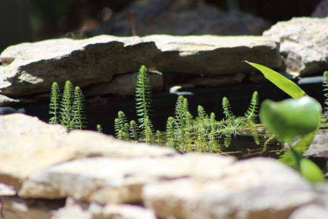 Mon p'tit jardin 088zr8