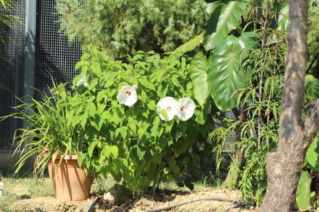 Mon p'tit jardin 089ttt