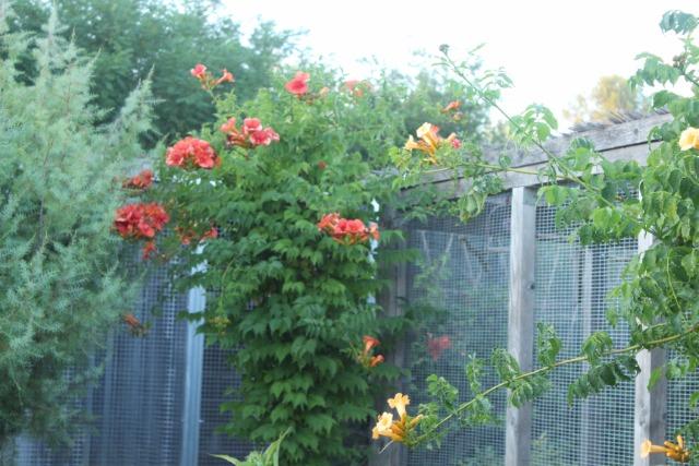Mon p'tit jardin 08c4ng