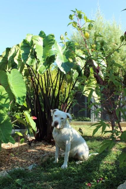 Mon p'tit jardin 08g522