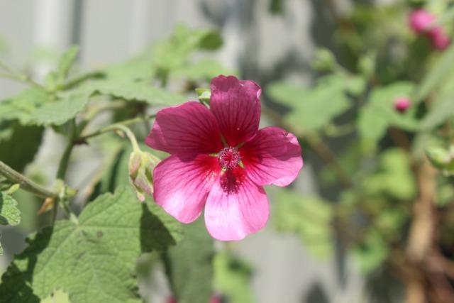 Mon p'tit jardin 08gk6k