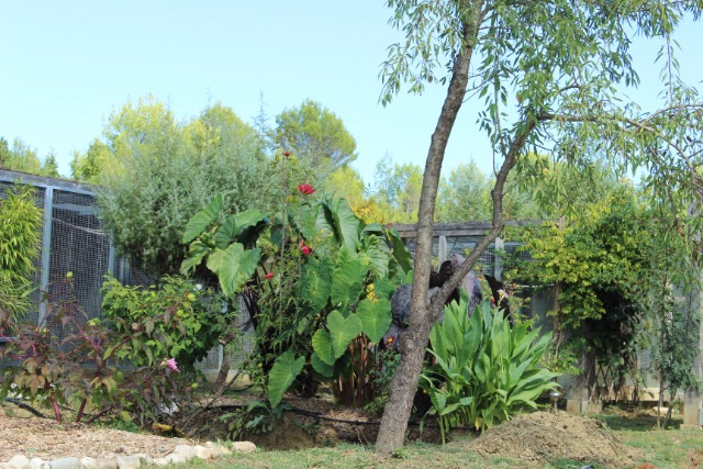Mon p'tit jardin 08hi20
