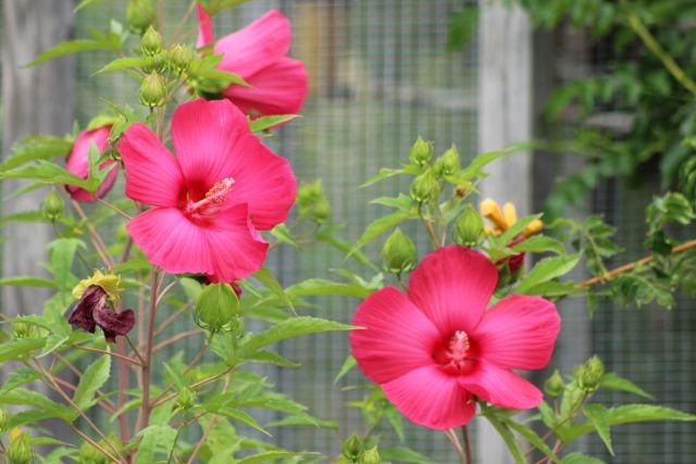 Mon p'tit jardin 08hoa5
