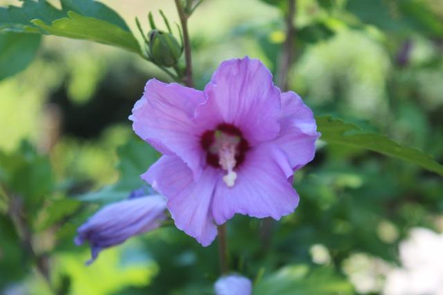 Mon p'tit jardin 08o9fj