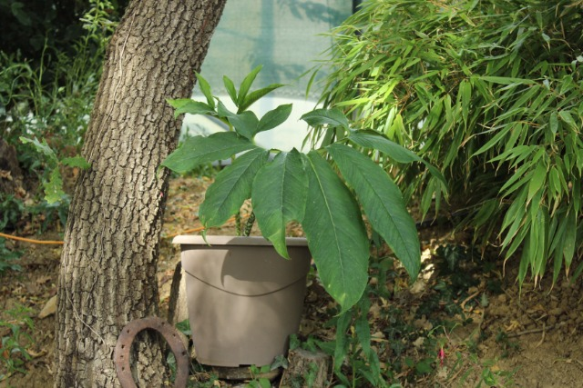 Mon p'tit jardin 08r4ag