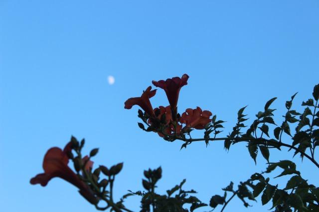 Mon p'tit jardin 08vy26
