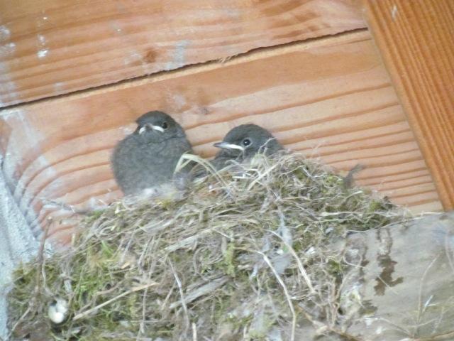 les oiseaux et petites bêtes au cours de nos balades - Page 6 15b2rh