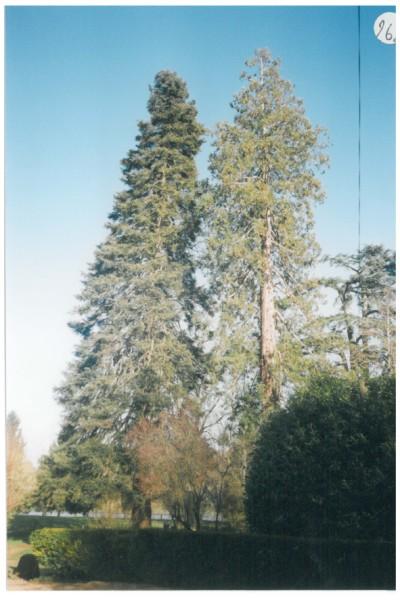 Arbres porteurs pour plateforme dans les arbres 14695_Bruno_Petit_Vienne_Nature