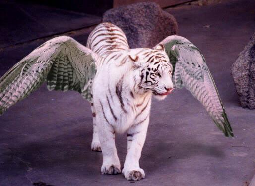أربعة نمور صينية أثارت الذعر ببلاد العم سام - صفحة 3 Flying_tiger