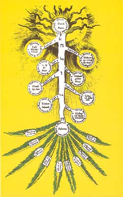 THEOSOPHY: THE MEANING OF THE NAME Palmera_invertida_fludd