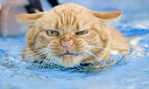 Et si nous étions des chats? Cats-and-water2