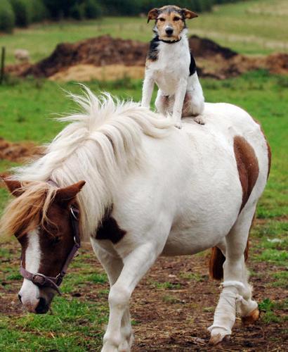 Kawa ima enculé Freddie-on-shetland-pony