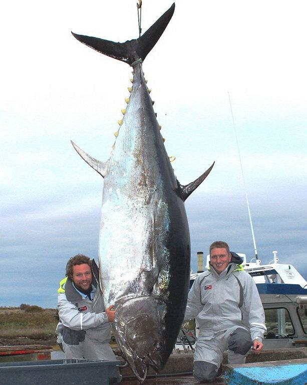Книга рекордов Гиннеса 2011, 2012, 2013 - Страница 3 Fish