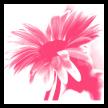 : توبيكات ماسنجر ملونه 2010-201 582741pdb3hjw73c