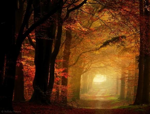 Svašta nešto - Page 2 Autumn_fire_by_nelleke-d56ogsw-580x442