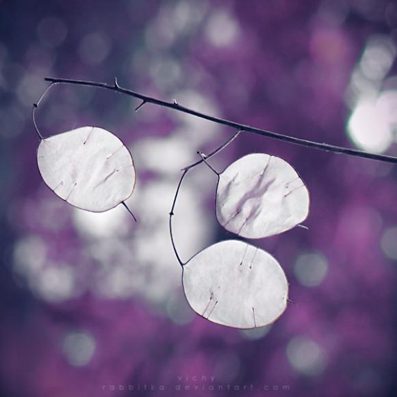 Svašta nešto Purple_autumn_by_rabbitka-d30j7oi-580x580