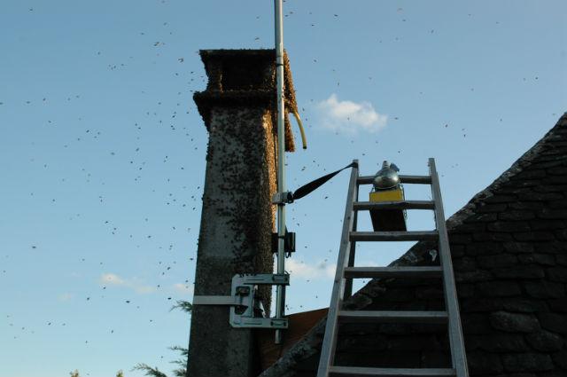 Récupération d'essaim dans une cheminée 1ad1mp