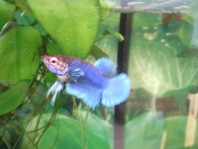 Mes repros, PK dragon armadillo bi-colore et PK big ears multi X salamander - Page 3 6d097l