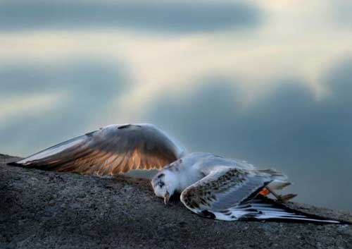 Cementerios naturales de animales ¿Mito o realidad? Dzhatinga