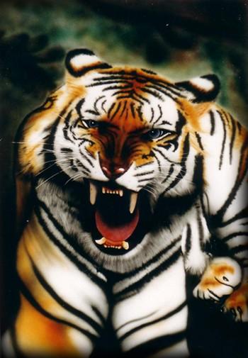 Humore montazhi dhe foto tjera humoristike - Faqe 2 Tigre
