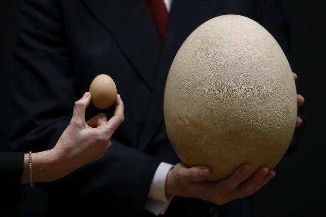 Haced aquí vuestros aportes para el Bestiario Huevo-gigante-15_642x428