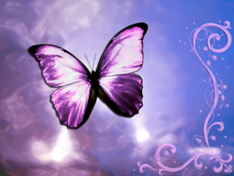 جرب صديــقك قبـل ماّ تحتــاج اليــه Butterfly_Wallpaper