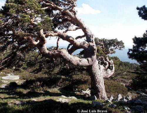 Tesoros ocultos en Asturias Etno_194