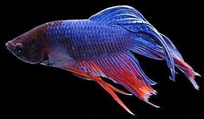 L'aquariophilie, une passion...