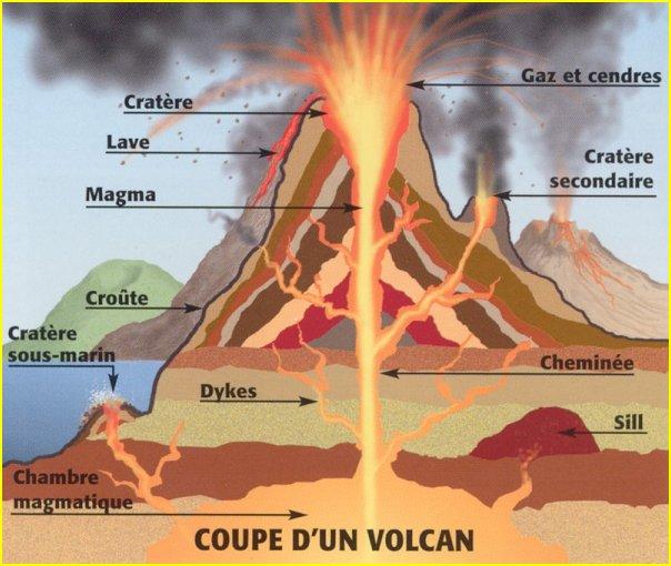 Arbres géants  Volcan_00