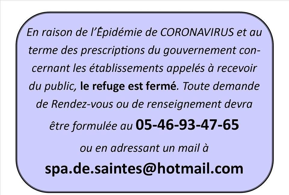 TEXAS 12 ans et LUCKY 10 ans - setter gordon - Spa de Saintes (17) FERMETURE_covid-19