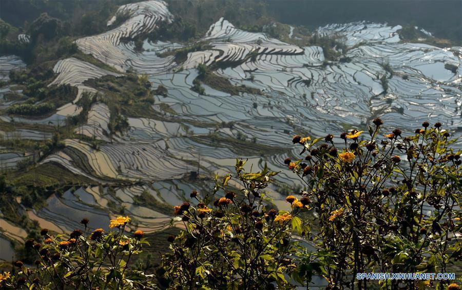 Terrazas de arroz en Yunnan (China). 135001195_14525785839641n