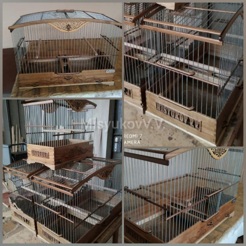 Фотографии моих птиц  - Страница 6 96fae