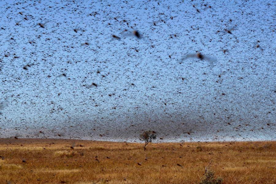 ФОТО - Page 3 Surprising-photos-bird-swarm