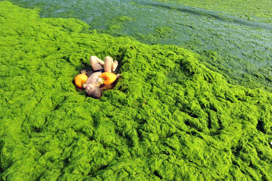 ФОТО - Page 3 Surprising-photos-china-algae