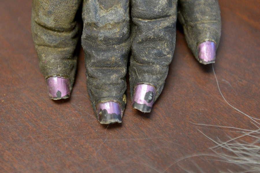 ФОТО - Page 3 Surprising-photos-gorilla-nails