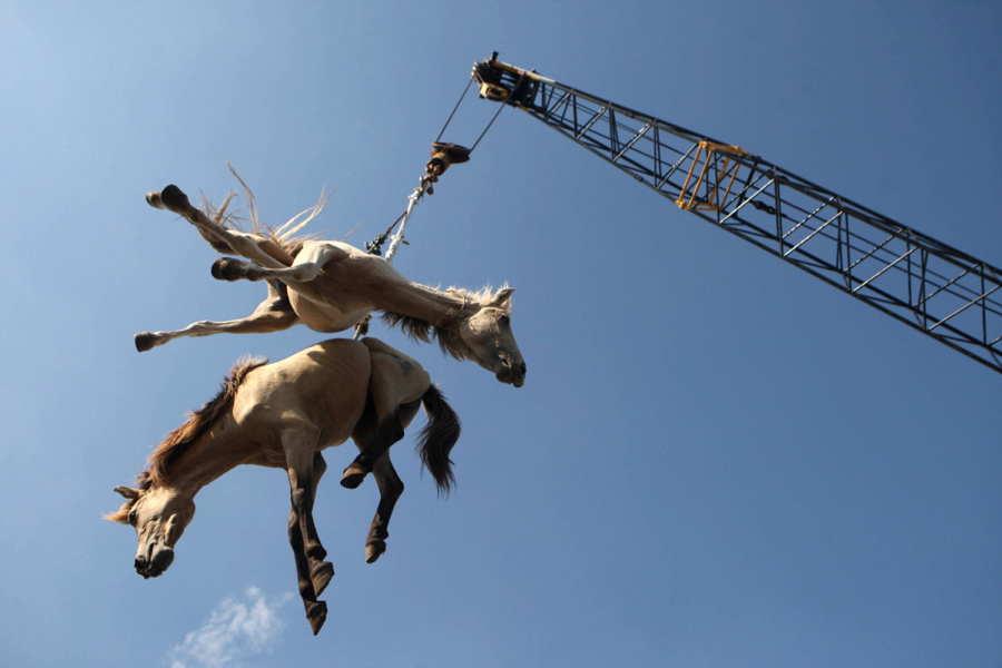 ФОТО - Page 3 Surprising-photos-horses