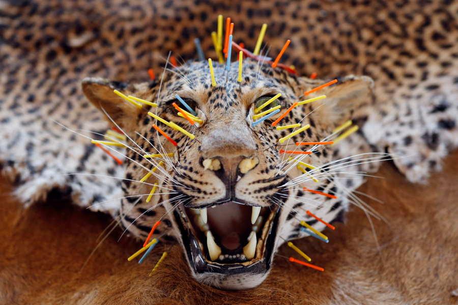 ФОТО - Page 3 Surprising-photos-leopard-rug