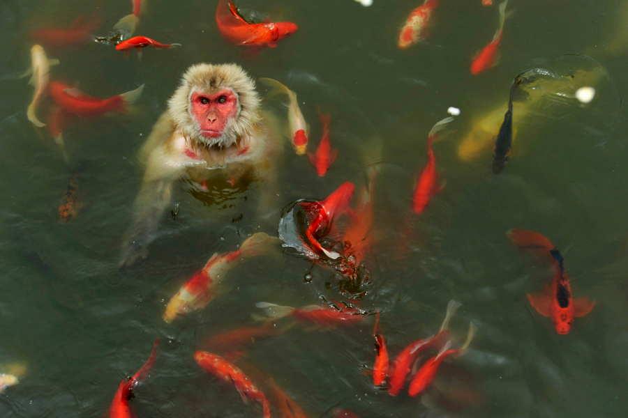 ФОТО - Page 3 Surprising-photos-monkey-fish