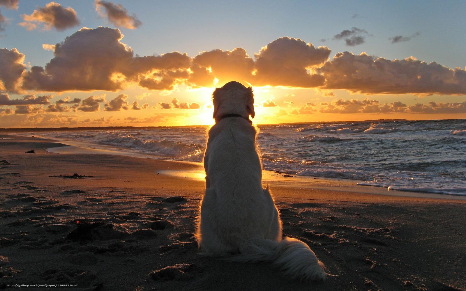 Zalazak sunca-Nebo - Page 8 124982_sobaka_zakat_more_2560x1600_%28www.GdeFon.ru%29