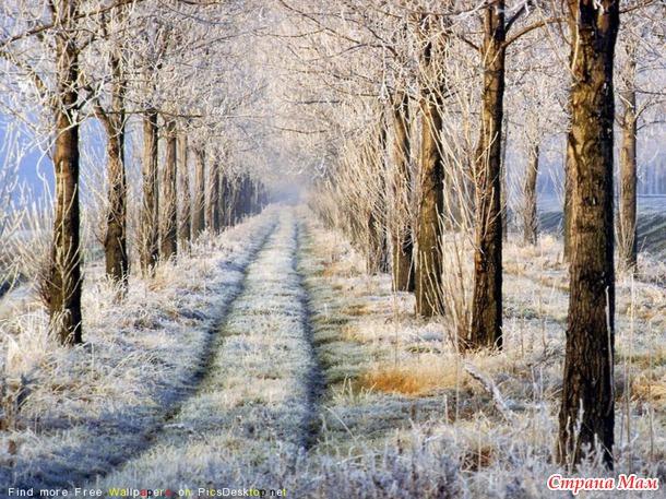 """А белая зима началась внезапно.."" (с) 14179711_39915thumb650"