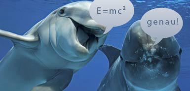 Besonderheiten der Natur WkGQQC_25662_dolphins