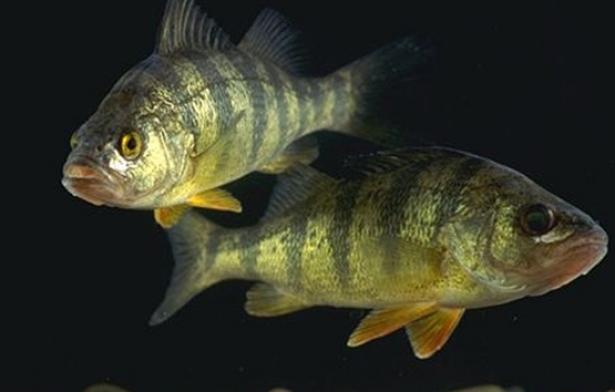 85% من أسماك العالم تحتوي على الزئبق السام 2_143392_large