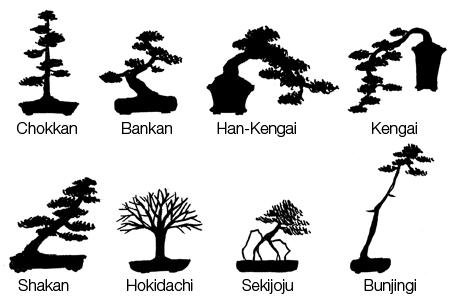 estilos de bonsai o siluetas? Bonsai-style