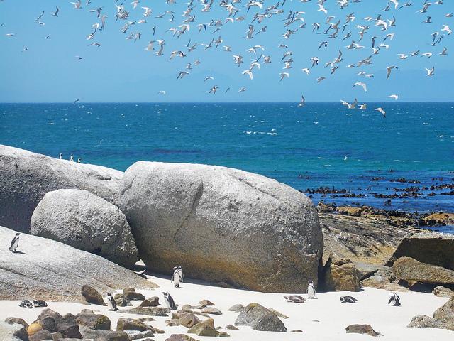 Najčudnije plaže na svetu  1410076106504203a83f4bd661681223