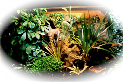 Le terrarium semi-humide /Humide Artfichier_347308_4429226_201501040126524