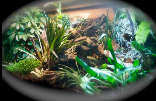 Le terrarium semi-humide /Humide Artfichier_347308_4429620_201501042217404